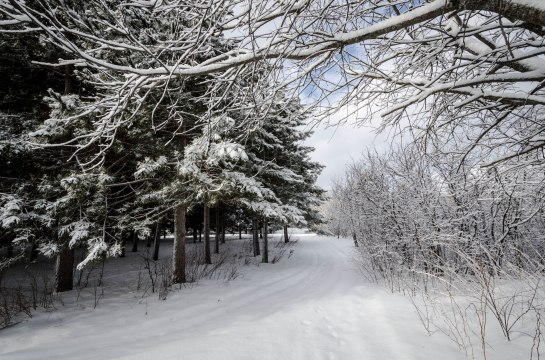 paysage  hiver arbres-3241