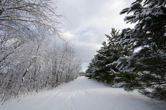 paysage  hiver pins-3231