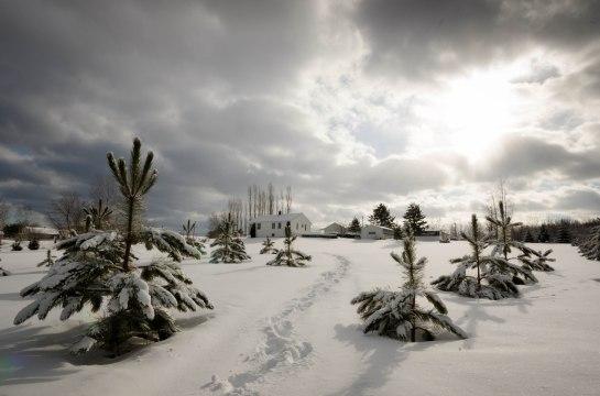 paysage  notre maison nos champs hiver pins-3225