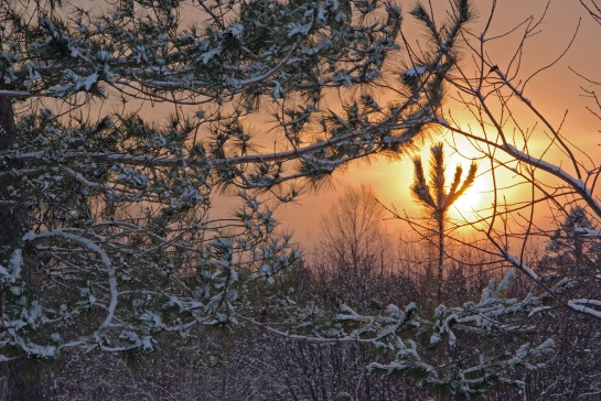 pins hiver coucher de soleil