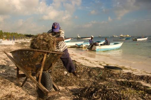 Nettoyeur de côte Rep Dominicaine 2- 2011 258 copy