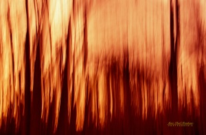 abstract feu de foret copy