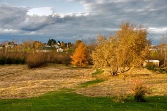 nos champs lumiere automne(1)-1 copy