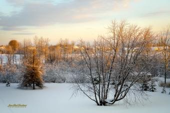 nos champs matin hiver de ma fenetre-1-1 copy